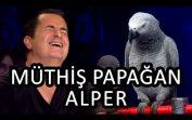 Papağan Alper ve Cuma Kaya